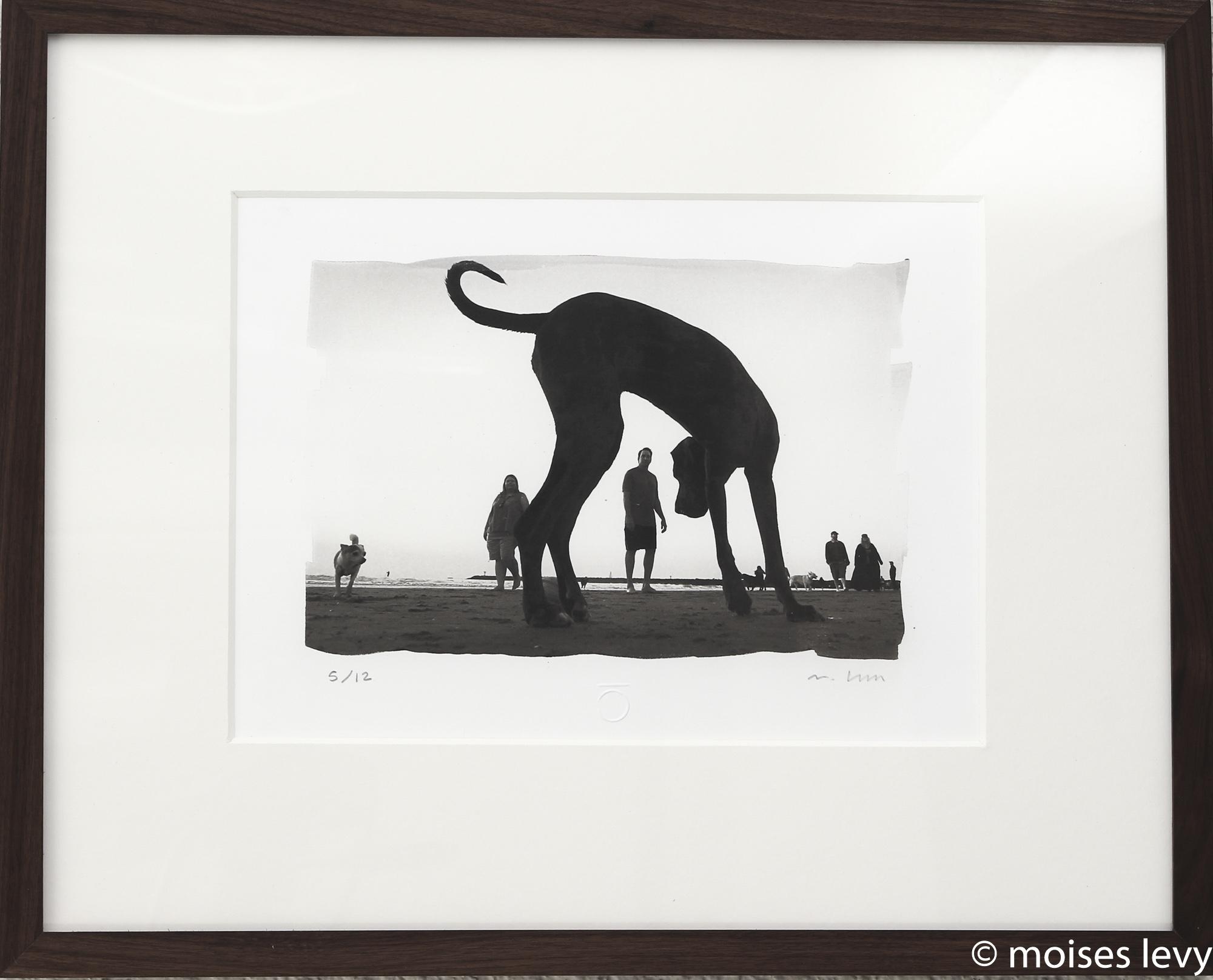 Spiral Dog Image