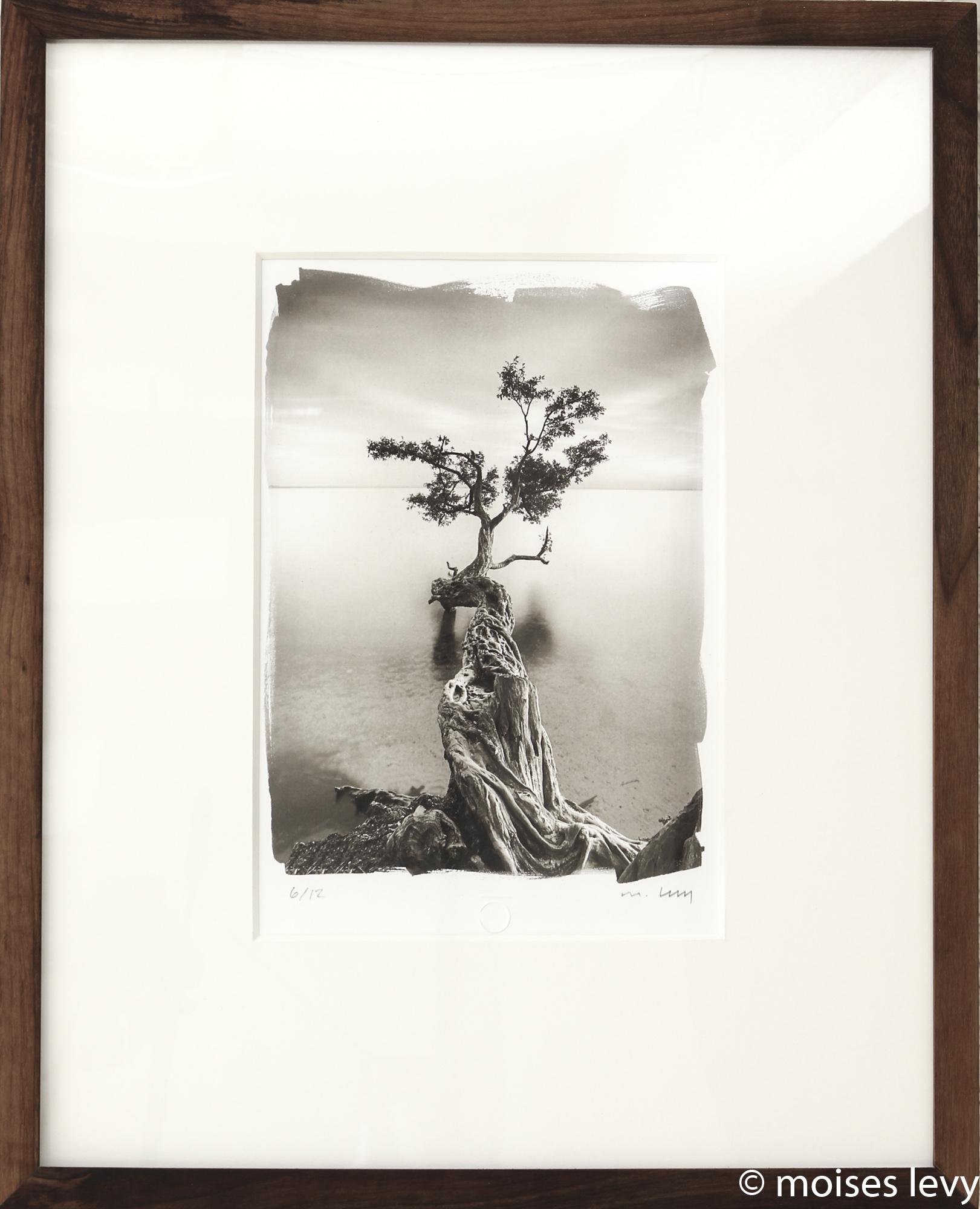 Water Tree Vertical Image